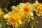 Spring_flowers_t1669